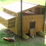 A view of the chicken door.