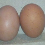 Brown And Speckled Egg