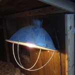 Chicken Coop Light