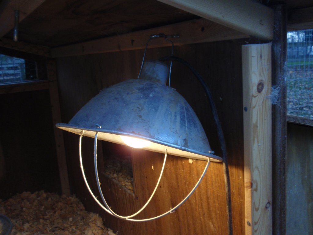 Put Heat Lamp In My En Coop