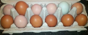 One Dozen Unwashed Fresh Eggs