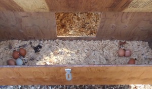 Outside Access to the Nest Box
