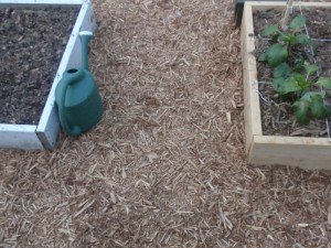 Mulched path between square foot garden beds