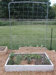 Using Vertical Space With A Square Foot Garden Trellis