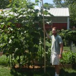 Gardner standing next to mongolian giant sunflower.