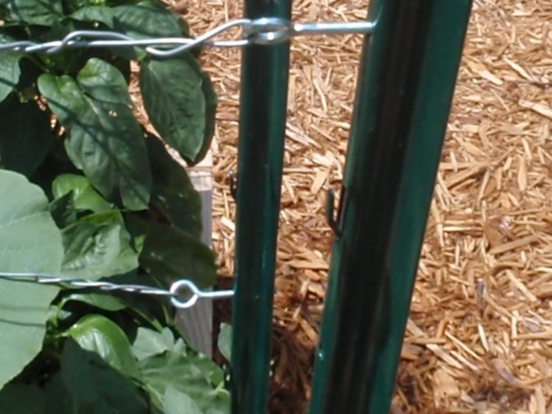 A Tomato Trellis That Won T Fall Down