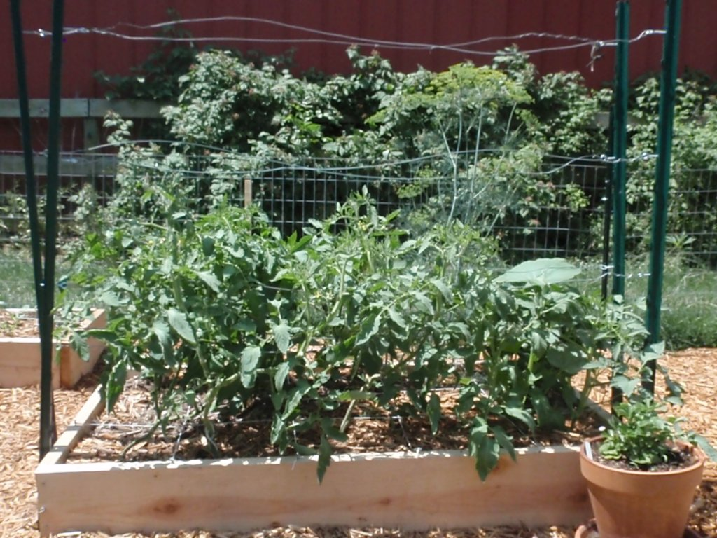 A tomato trellis that won 39 t fall down Tomato garden design