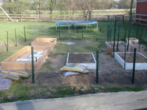 square foot garden with two new boses