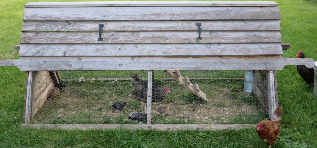 Picture of a catawba coop with chickens.