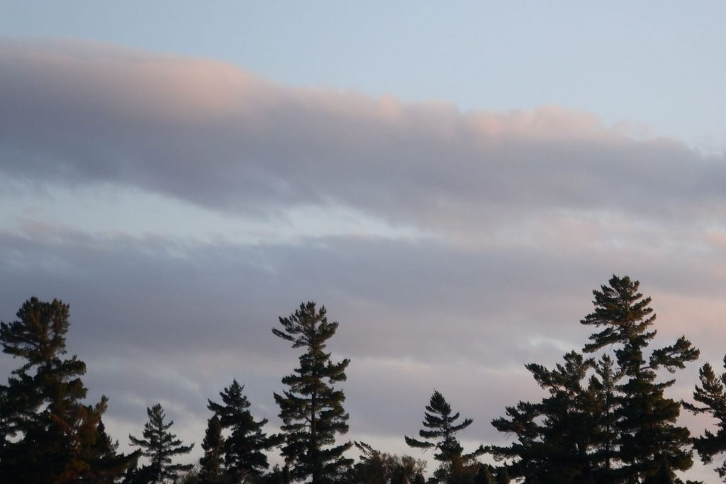 clouds and treetops